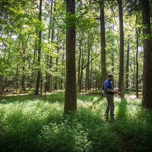 Man walks among tall forest trees